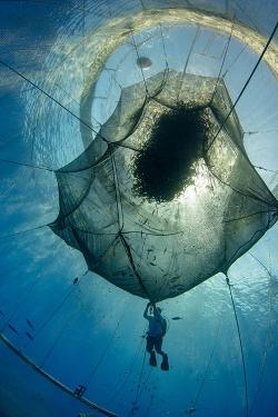 Underwater net with diver in the middle.