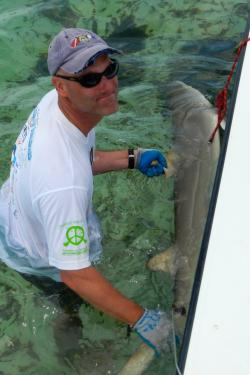 John Carlson restraining a lemon shark prior to tagging with a SPOT (Smart Position and Temperature) Transmitting Tags. These tags provide daily location information as part of a collaborative project to determine movements of sharks throughout the Bahamas and off the U.S. southeast coast.