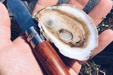 "A hand holding an oyster knife and a freshly shucked ""Salty Bird"" oyster."