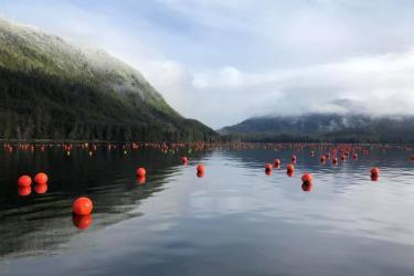 Floating orange spheres mark the waters of Seagrove Kelp Co.