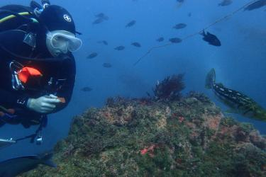 A diver examines a healthy rocky reef with fish swimming around.