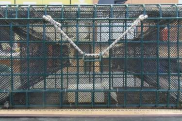Rectangular metal fish trap with mesh inside.