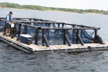 A man on a dock next to finfish aquaculture pens.