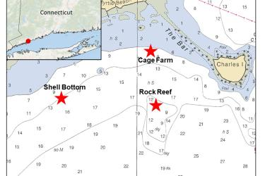 Map of the Connecticut shoreline showing Milford, and Charles Island. Three stars indicate study sites: Shell bottom (farthest west), rock reef (farther south and farthest offshore) and cage farm (farthest east).