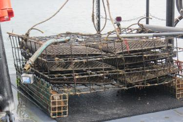 A metal oyster cage on a boat deck with three shelves holding six mesh bags. Two GoPro cameras are affixed to corners of the cage.