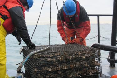 An oyster cage containing mesh bags full of oysters on the back of a ship. Two scientists are affixing GoPro cameras to the corners of the cage.