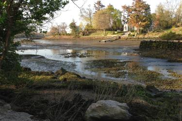 Inlet on the Connecticut coast with the tide halfway out and shellfish visible