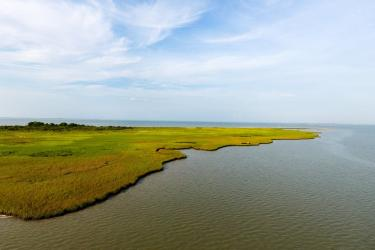 Salt Marsh in Texas