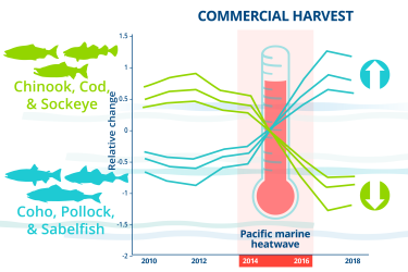 Infographic charting relative changes affecting commercial fish harvest from 2010-2018 and highlighting the 2014-2016 Pacific marine heatwave.