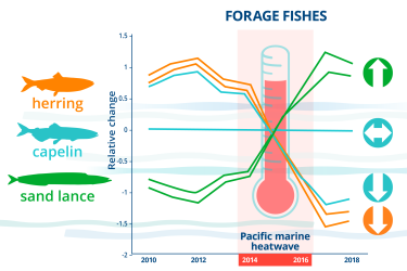 Infographic charting relative changes affecting fish abundance from 2010-2018 and highlighting the 2014-2016 Pacific marine heatwave.