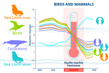 Infographic charting relative changes affecting seabirds and mammals from 2010-2018 and highlighting the 2014-2016 Pacific marine heatwave.