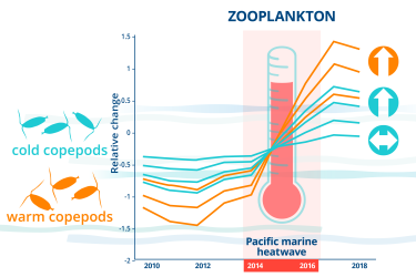 Infographic charting relative change in zooplankton abundance from 2010-2018 and highlighting the 2014-2016 Pacific marine heatwave.