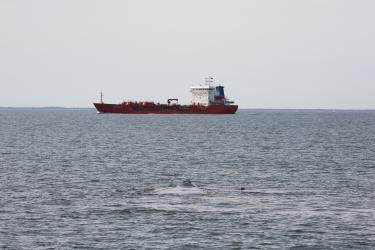 Tanker ship and North Atlantic right whale and calf