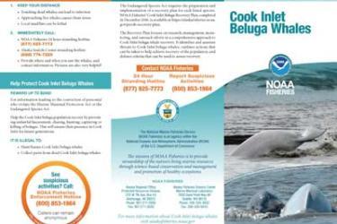 Cook Inlet Beluga Whales brochure thumbnail