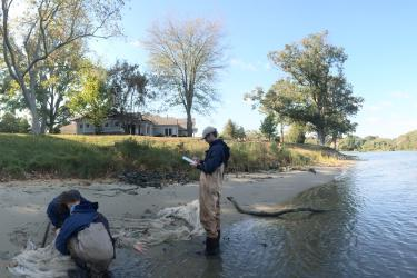 Three scientists examine and document the contents of a net on the shores of a river.
