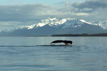 A humpback whale tail fluke is visible above the water with mountains in the background.