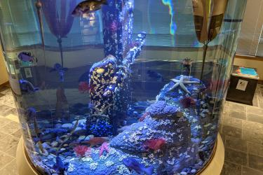 Photo of a large cylindrical aquarium with fish, sea stars, rocks and artificial kelp.
