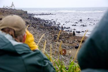 Photo of two researchers viewing fur seals on a rocky beach and in the surf from an adjacent bluff.