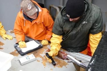 Photo of two researchers in waterproof coats and gloves using handheld instruments on a fish sample.