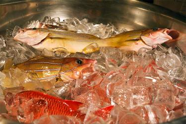 Fish sitting on ice in a metal bowl.