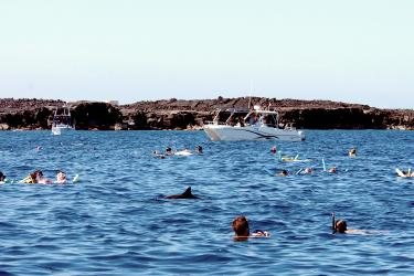 Spinner dolphin around a crowd of people and boaters.