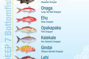Bottomfish chart
