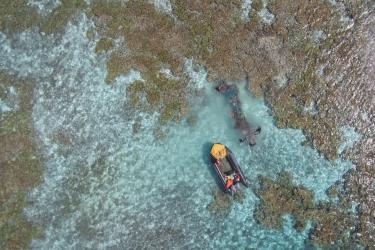 2250x1687-2018.09.28-Coral-Reef-Scar-StevenGnam.jpg