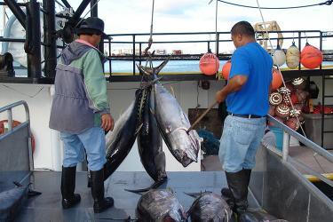 750x500-bigeye-tuna-offload-NOAA-PIRO.jpg