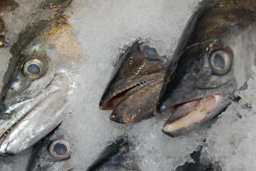 750x500-mackerel-sf.jpg