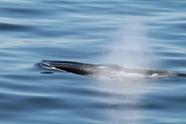 GoMex whale and blow750x500_3.jpg