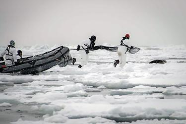 icesealecology_seal_catchers-retouched.jpg