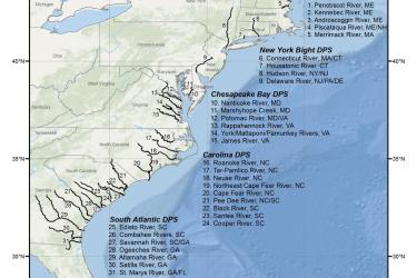 map-Atlantic-sturgeon-critical-habitat-GARFO-SERO.jpg