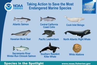 nine-species-in-the-spotlight.jpg