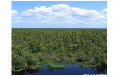 Pocosin Lakes National Wildlife Refuge, NC. Photo Credit_NOAA.jpg