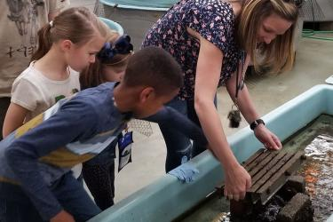 Woman and children looking for sea creatures in touch tank.