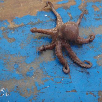 Octopus crawling on boat deck