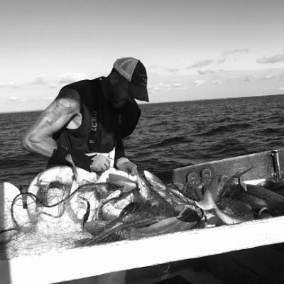 Doug Feeney removes fish caught in a gillnet aboard a fishing vessel.