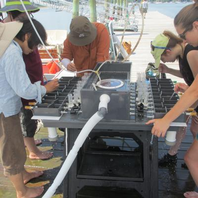 5 marine scientists hover around an experimental apparatus in which shellfish are feeding. They are collecting samples of the shellfish biodeposits using pipettes.