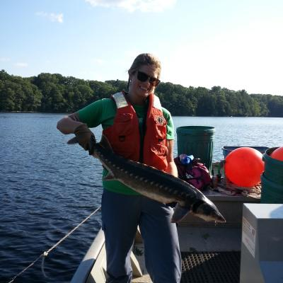 Penobscot Monitoring Coordinator, Molly Payne Wynne, holds a freshly tagged shortnose sturgeon just before release back into the Penobscot River