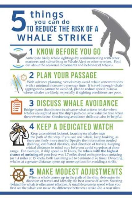 5 things you can do to reduce the risk of a whale strike
