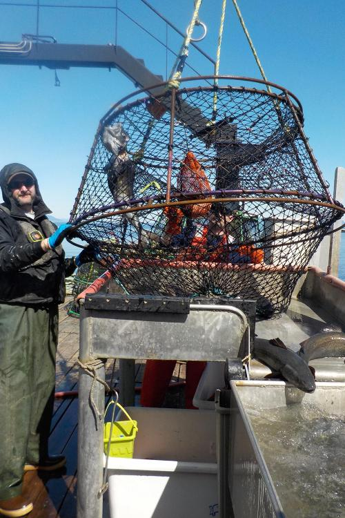 Photo of Adam Messmer with a sablefish pot net on a boat deck.