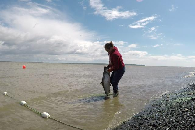Photo of woman lifting a salmon from the water on a beach.
