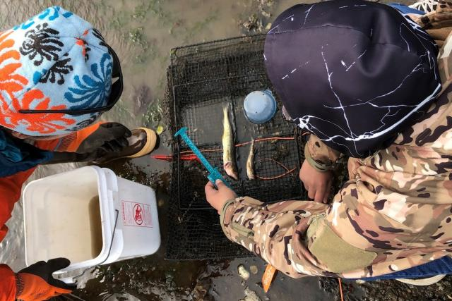 researchers examine invasive species of fish on beach