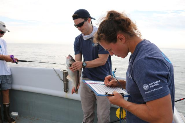 One researcher holds a fish while another researcher takes notes on a clipboard.