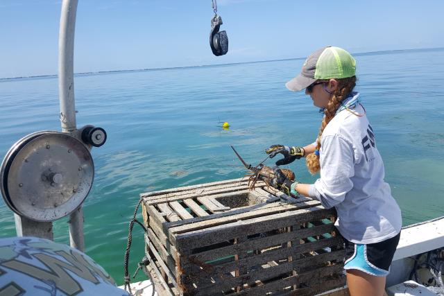 A researcher standing next to one of the experimental lobster traps holding a lobster.