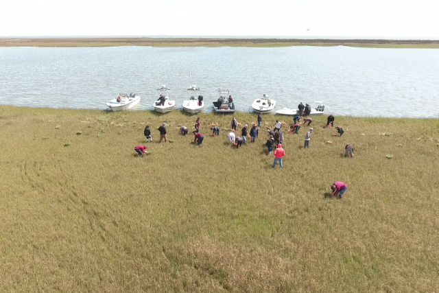 Volunteers from a local high school and the St. Bernard Sheriff's Marine Division plant marsh grasses.