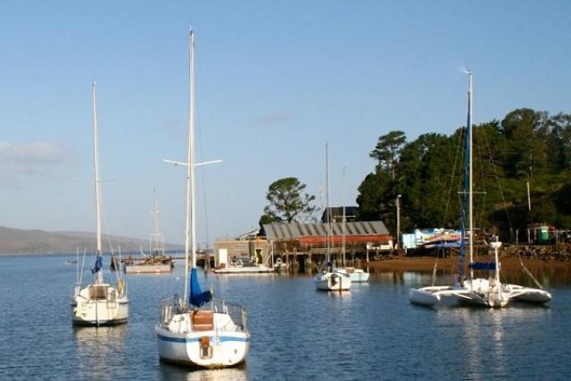 Sailboats moored in Tomales Bay.