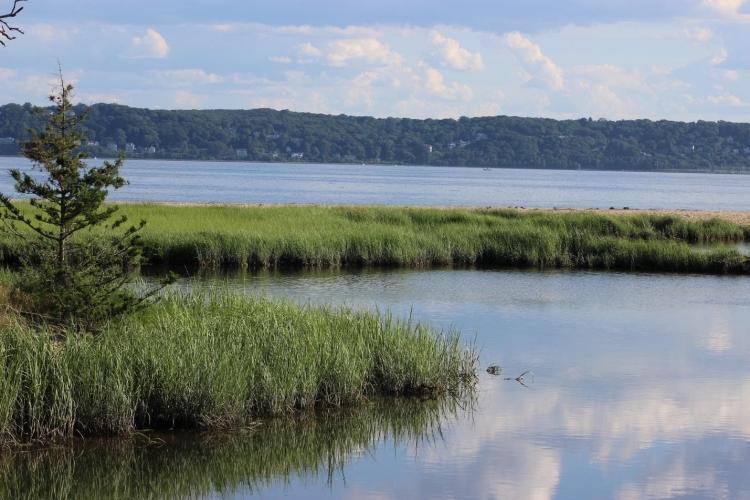 Coastal marsh within the Sandy Hook Bay estuary.