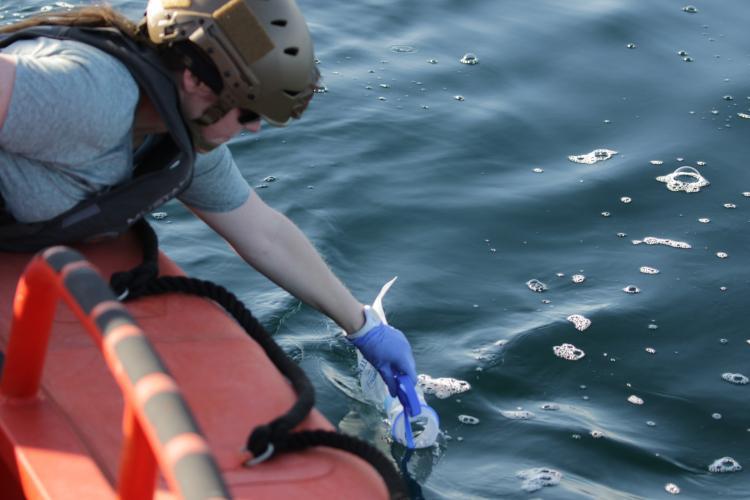 Scientist Nikki Vollmer collects sea water for eDNA analysis.