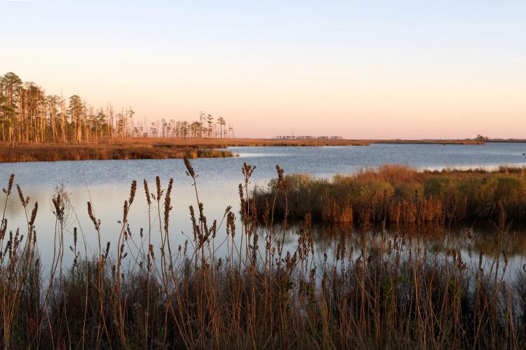A salt marsh